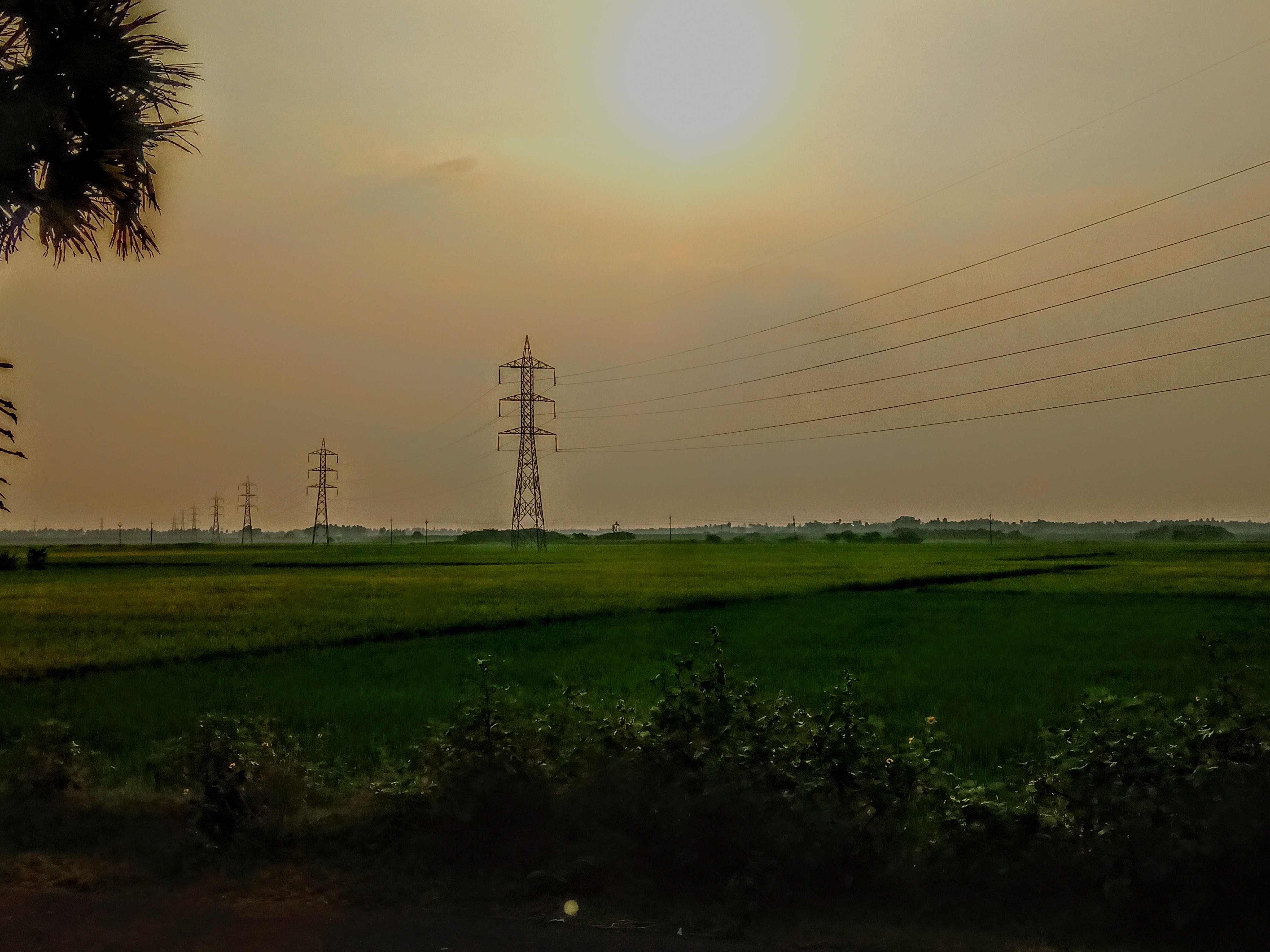 Free stock photo of paddy field