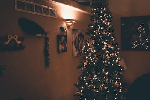 Foto d'estoc gratuïta de Adorns de Nadal, arbre, arbre de Nadal, avet