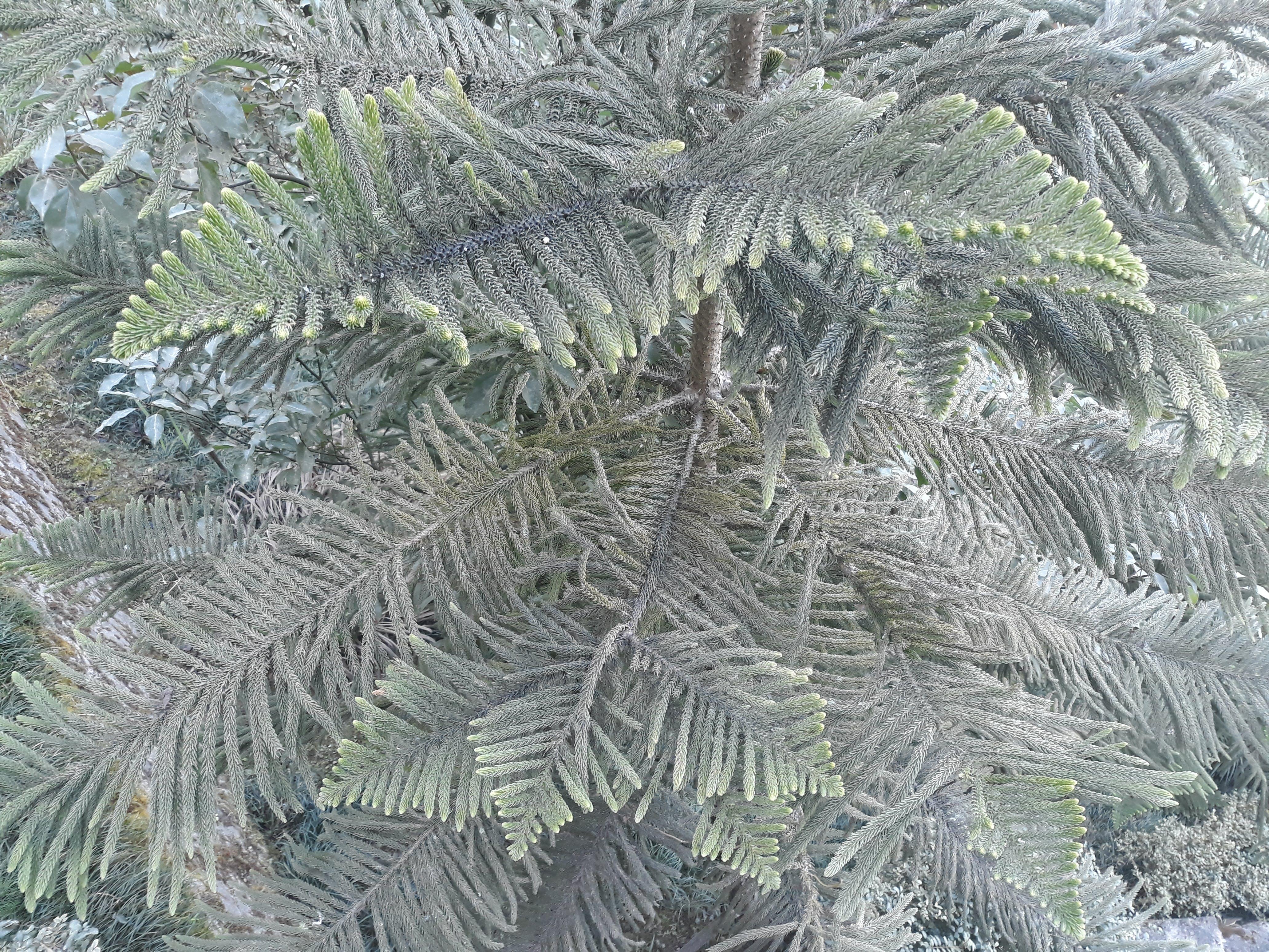 Free stock photo of Big leaf, nepal, pawankawam, tree