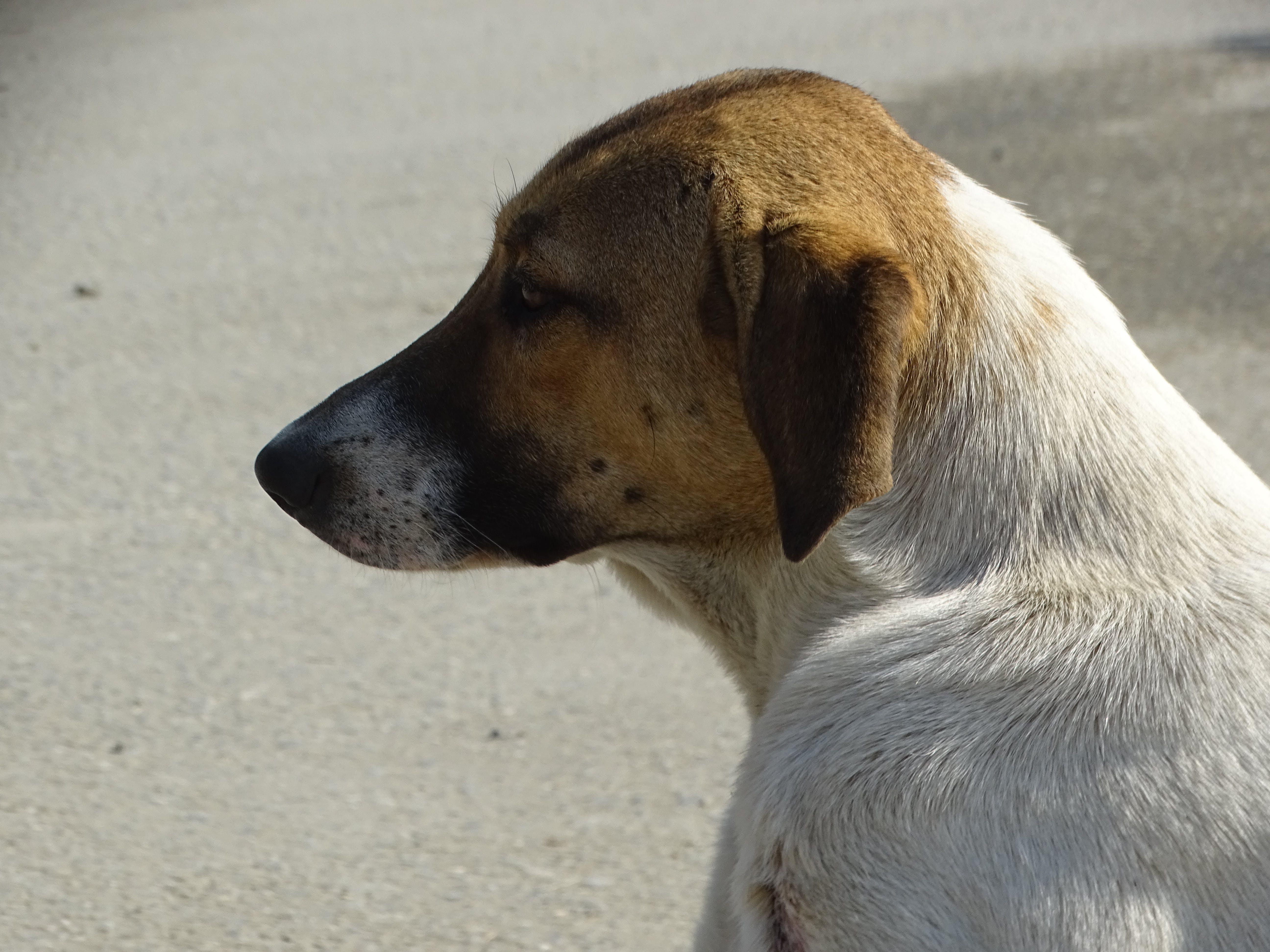 Kostenloses Stock Foto zu hund, ritt side dog, stinkender hund, straßenhund