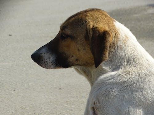 Fotos de stock gratuitas de cabalgó perro de lado, perro, perro callejero, perro maloliente