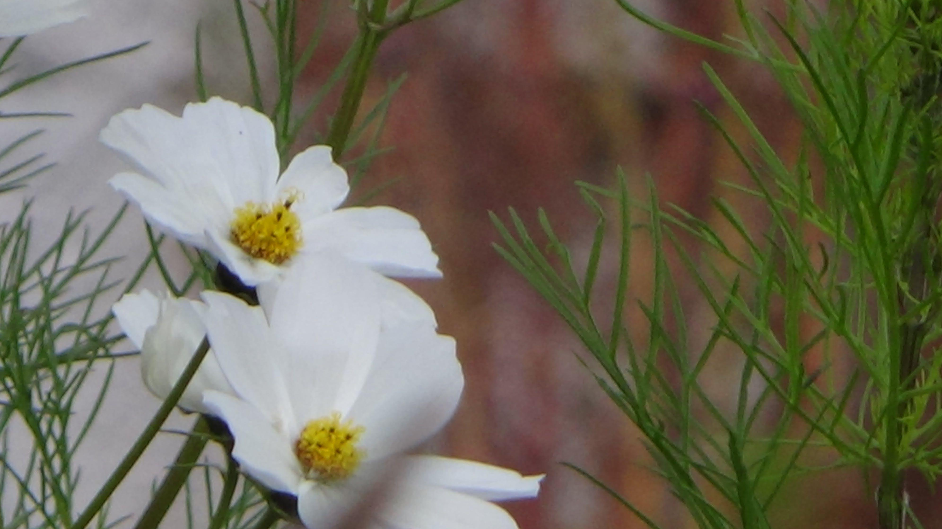 Foto profissional grátis de al flores, flores, flores bonitas
