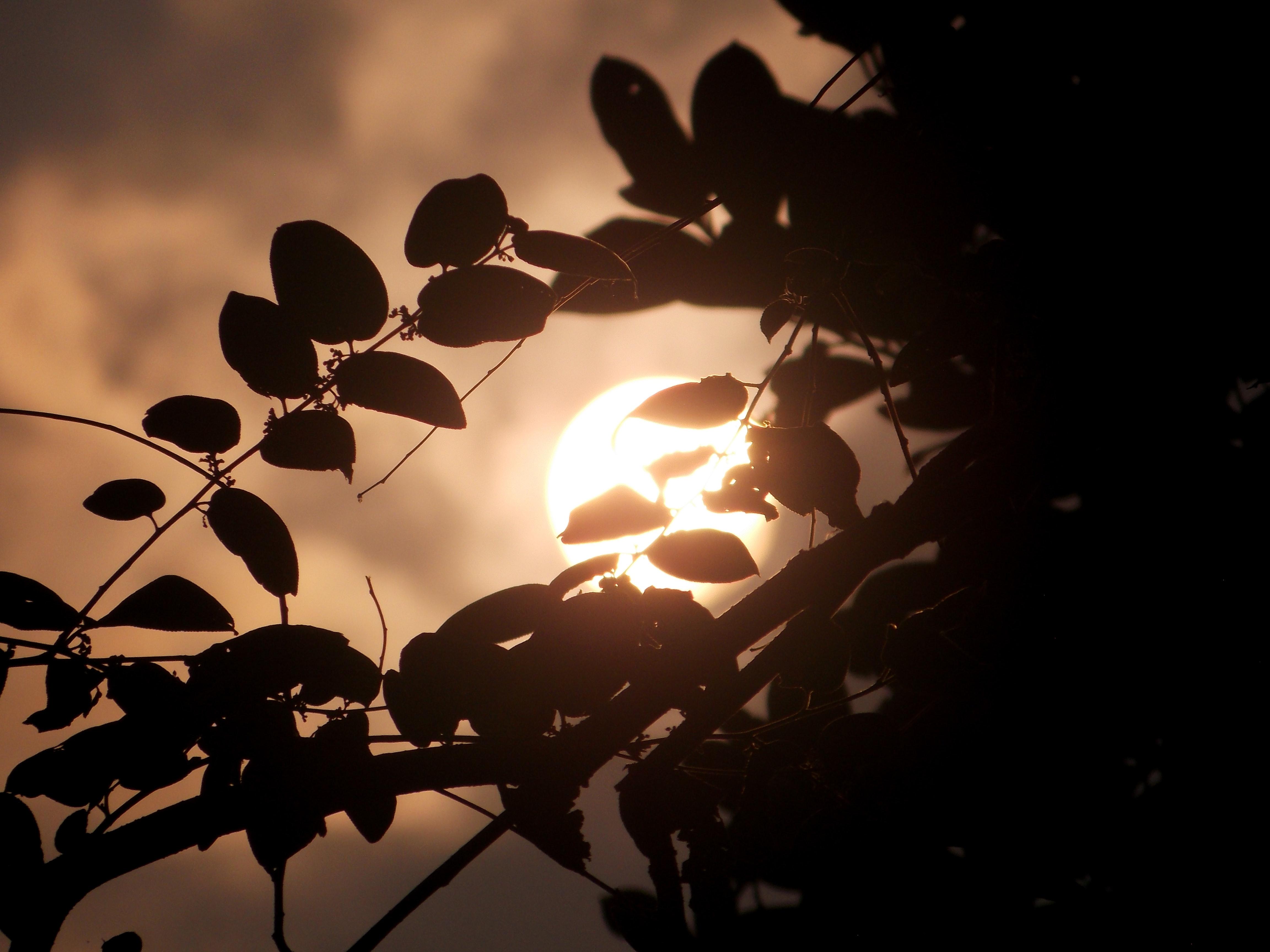 Free stock photo of golden sun, leafs, sun light