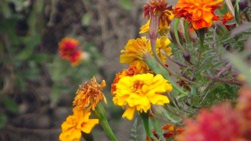 Fotos de stock gratuitas de flor amarilla