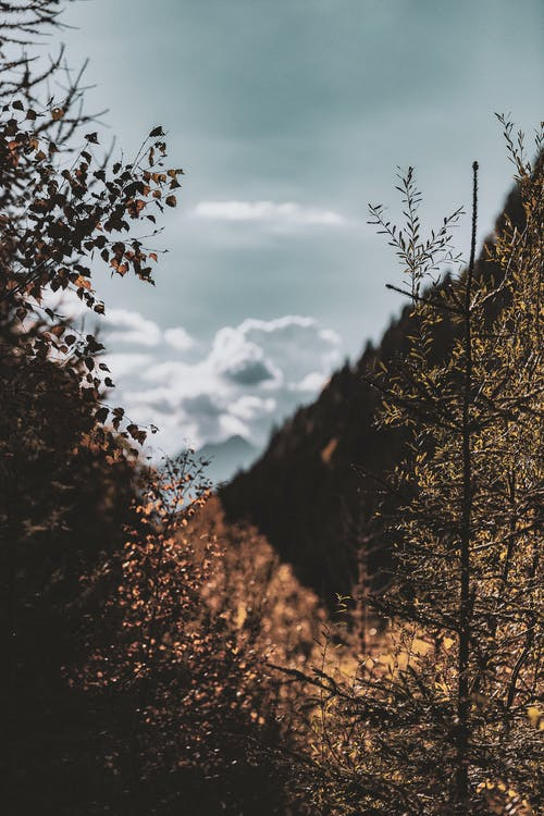 Gratis stockfoto met achtergrond, bomen, Bos, dageraad