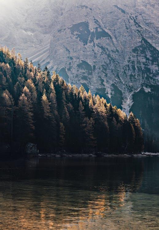 brzeg jeziora, cichy, drzewa