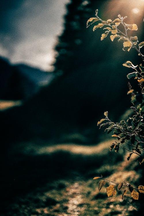 Gratis lagerfoto af makro, natur, plante