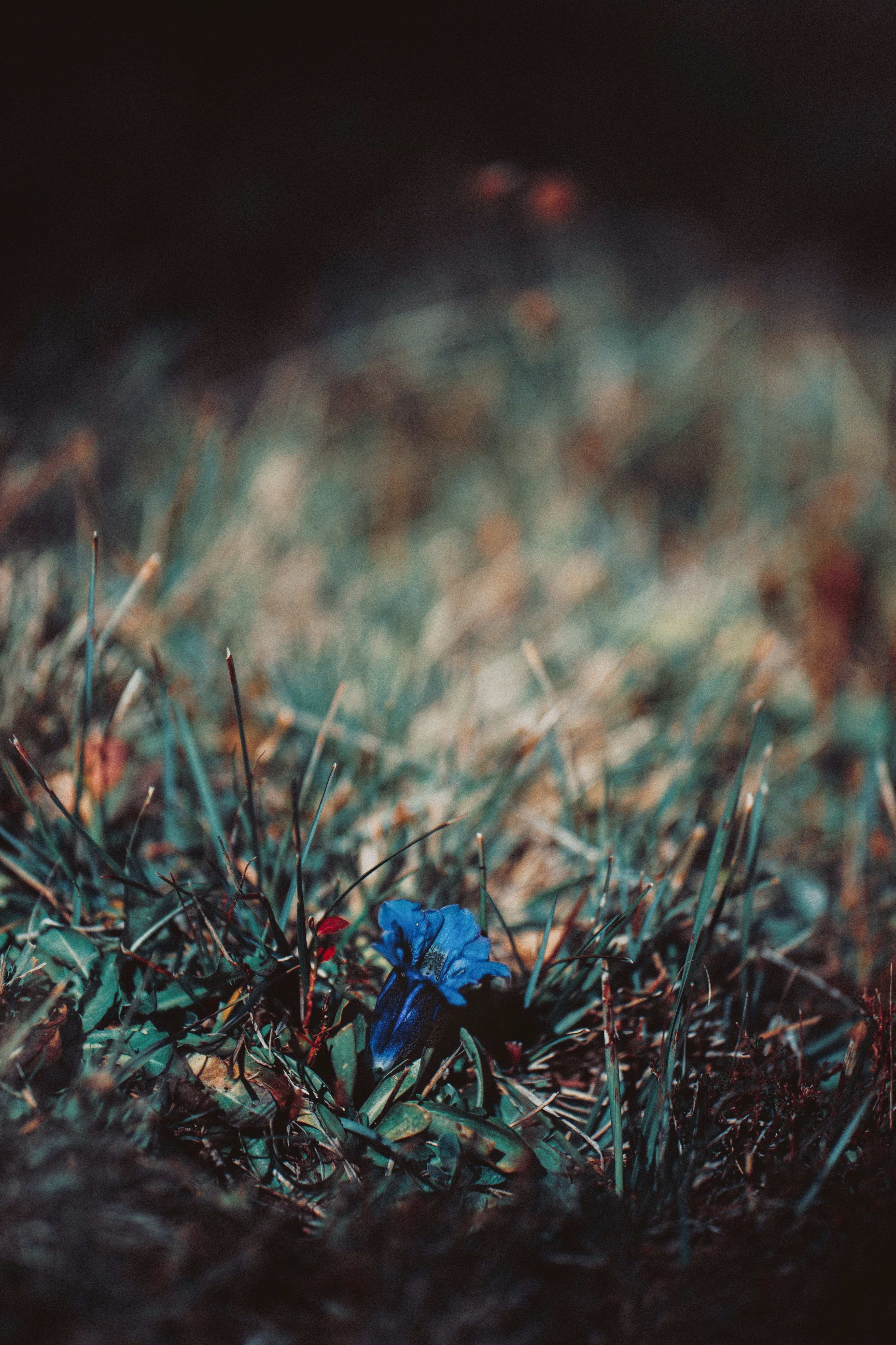 Blue Flower On Green Grass
