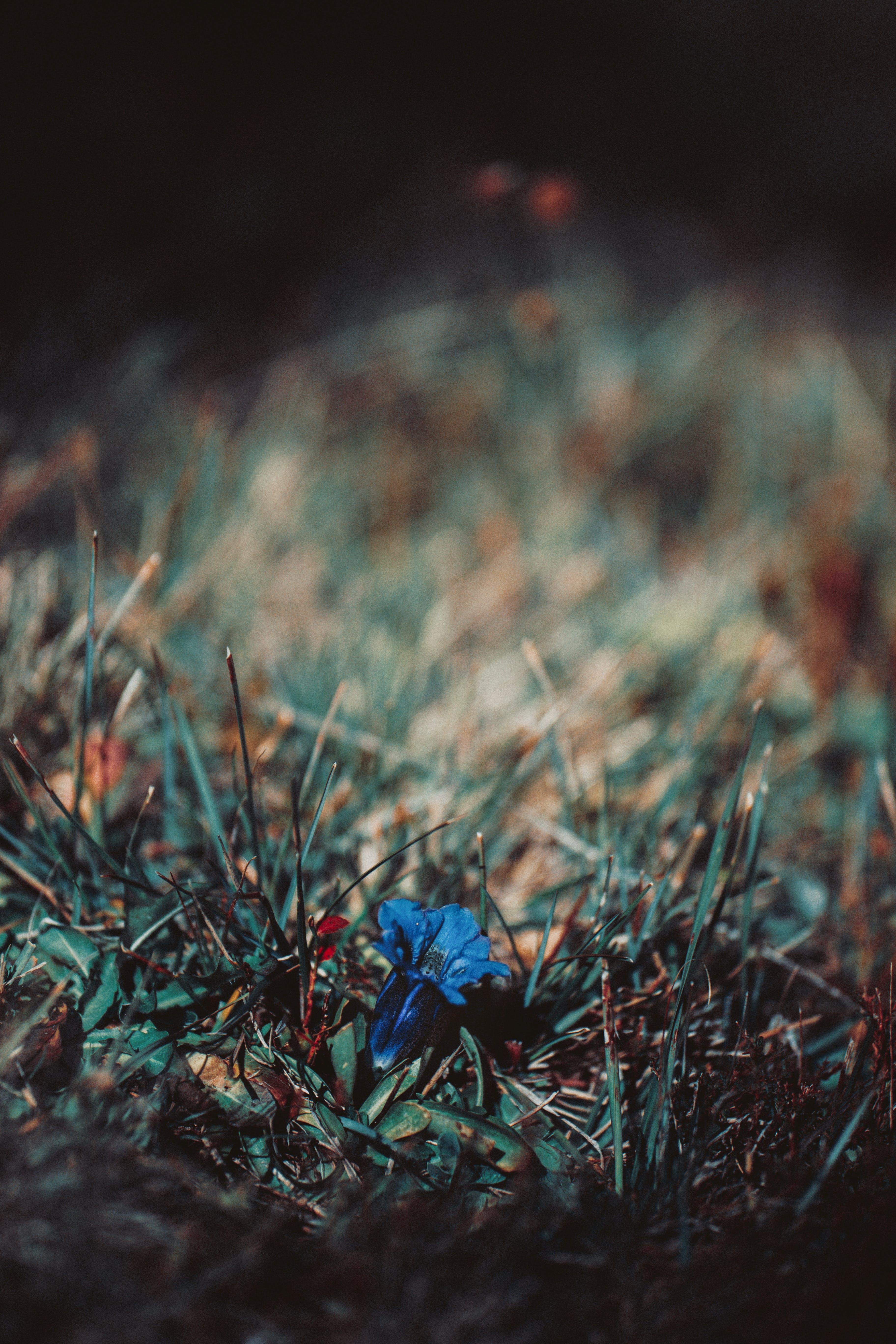 Blue Flower On Green Grass