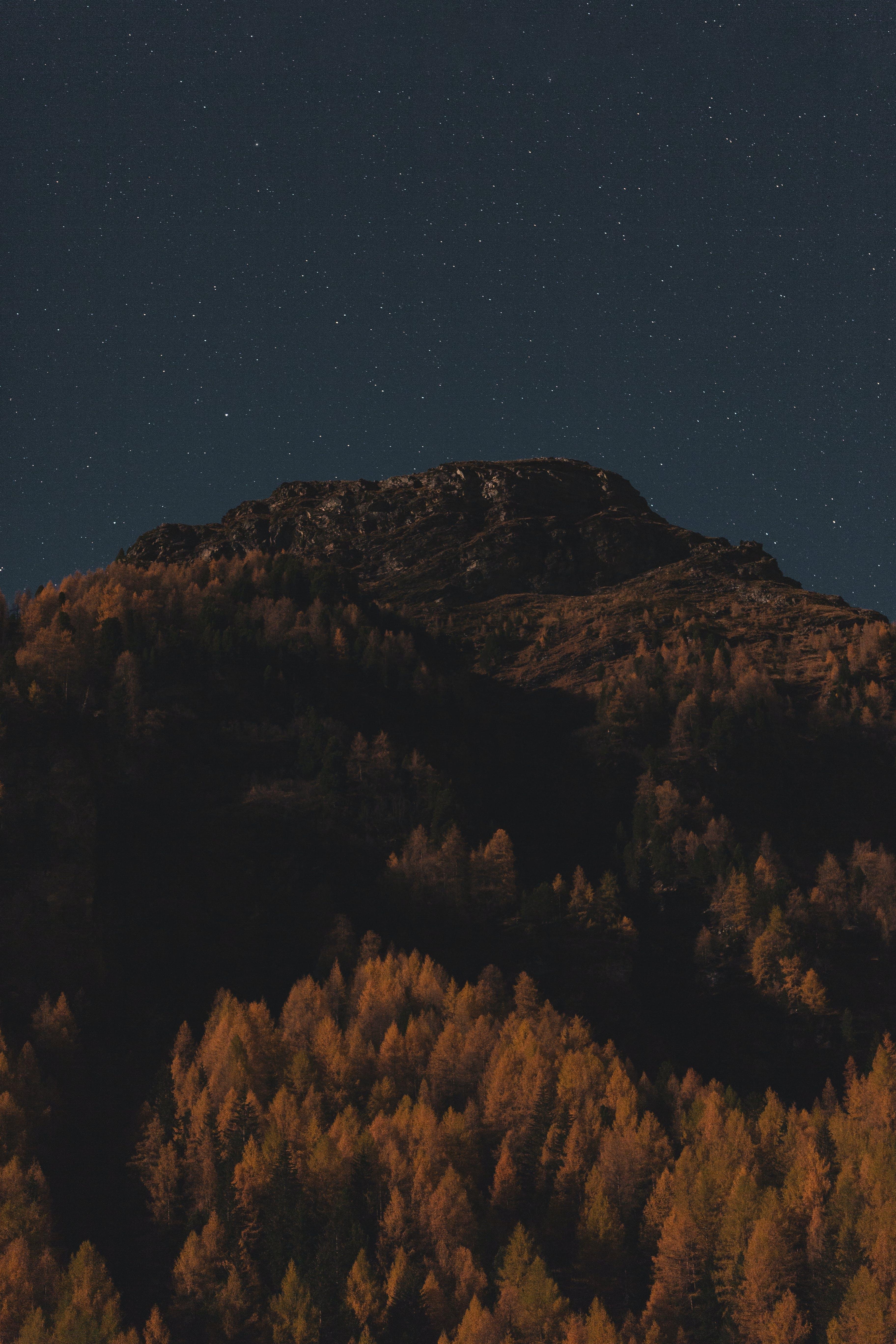 abend, astronomie, bäume