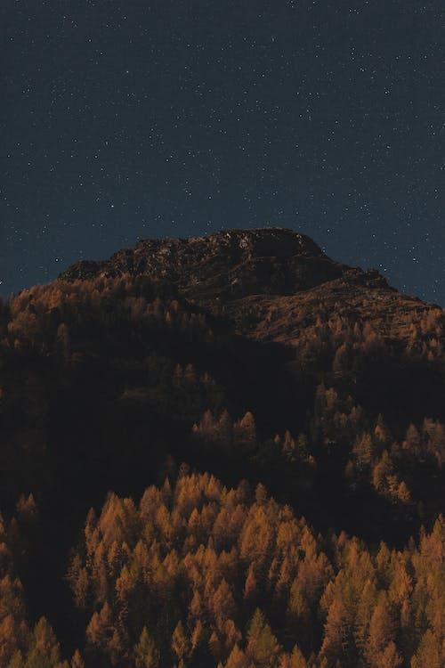 arbres, astronomia, cel