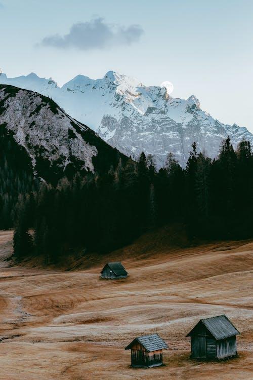 Gratis stockfoto met berg, bomen, Bos, landschap