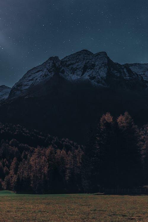 คลังภาพถ่ายฟรี ของ ดวงดาว, ดารา, ดาว, ต้นไม้