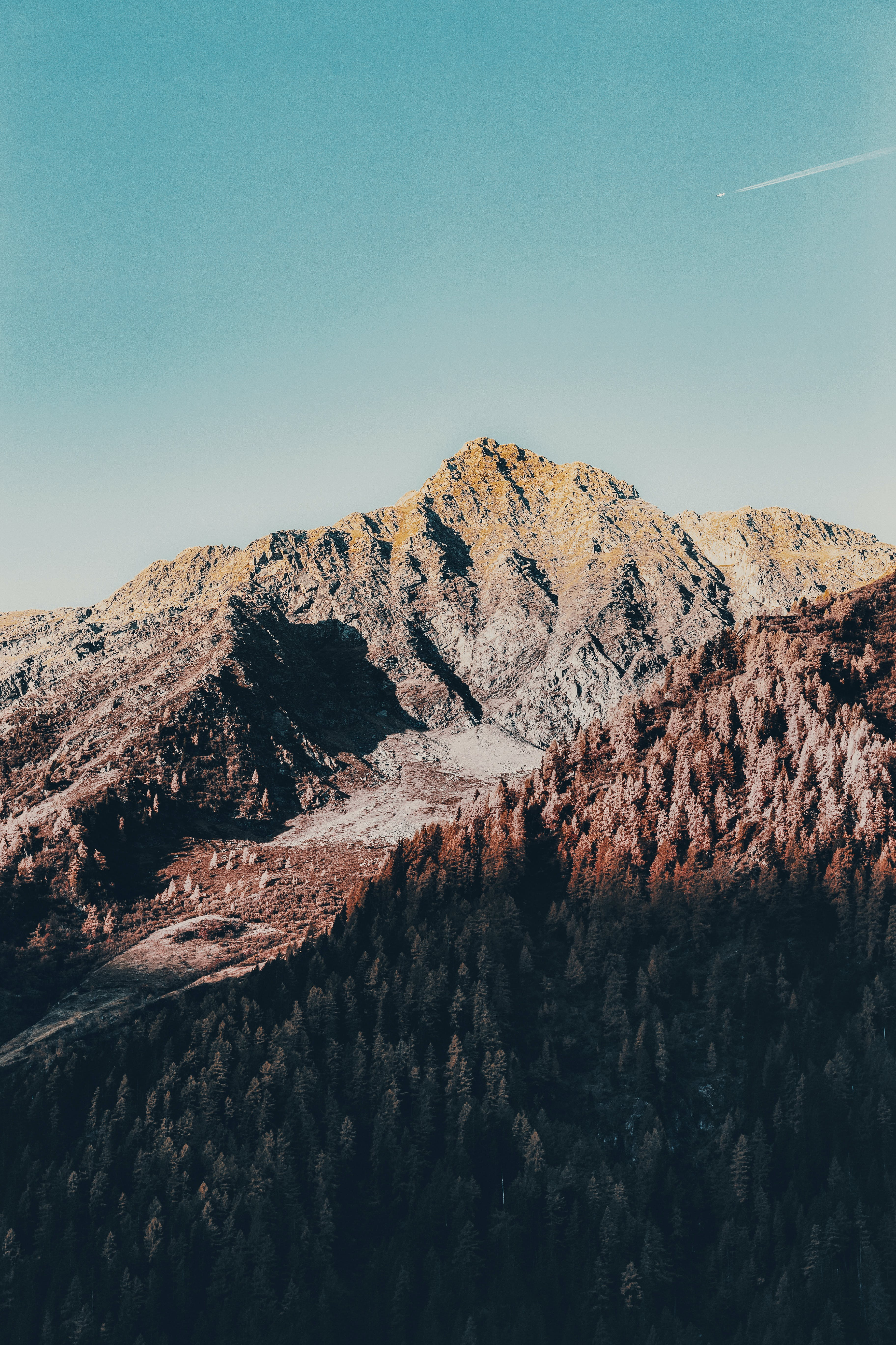 Pine Trees And Mountains