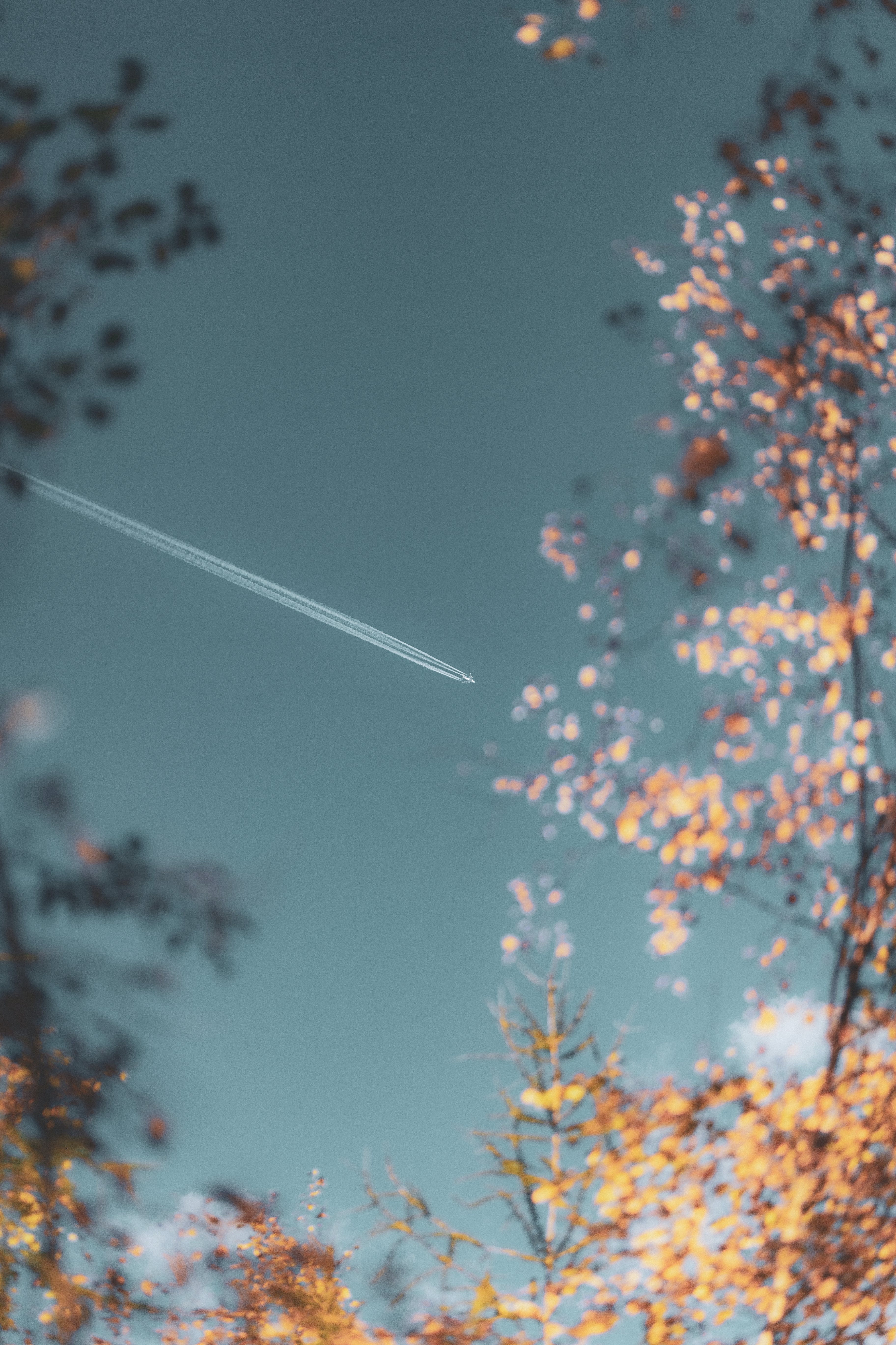 Selective Focus Photography Of Contrails