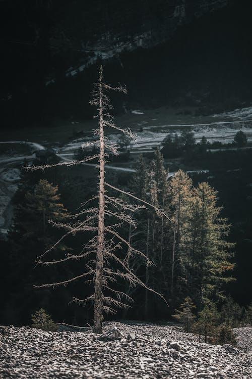 Gratis stockfoto met avontuur, bomen, decor, landschap