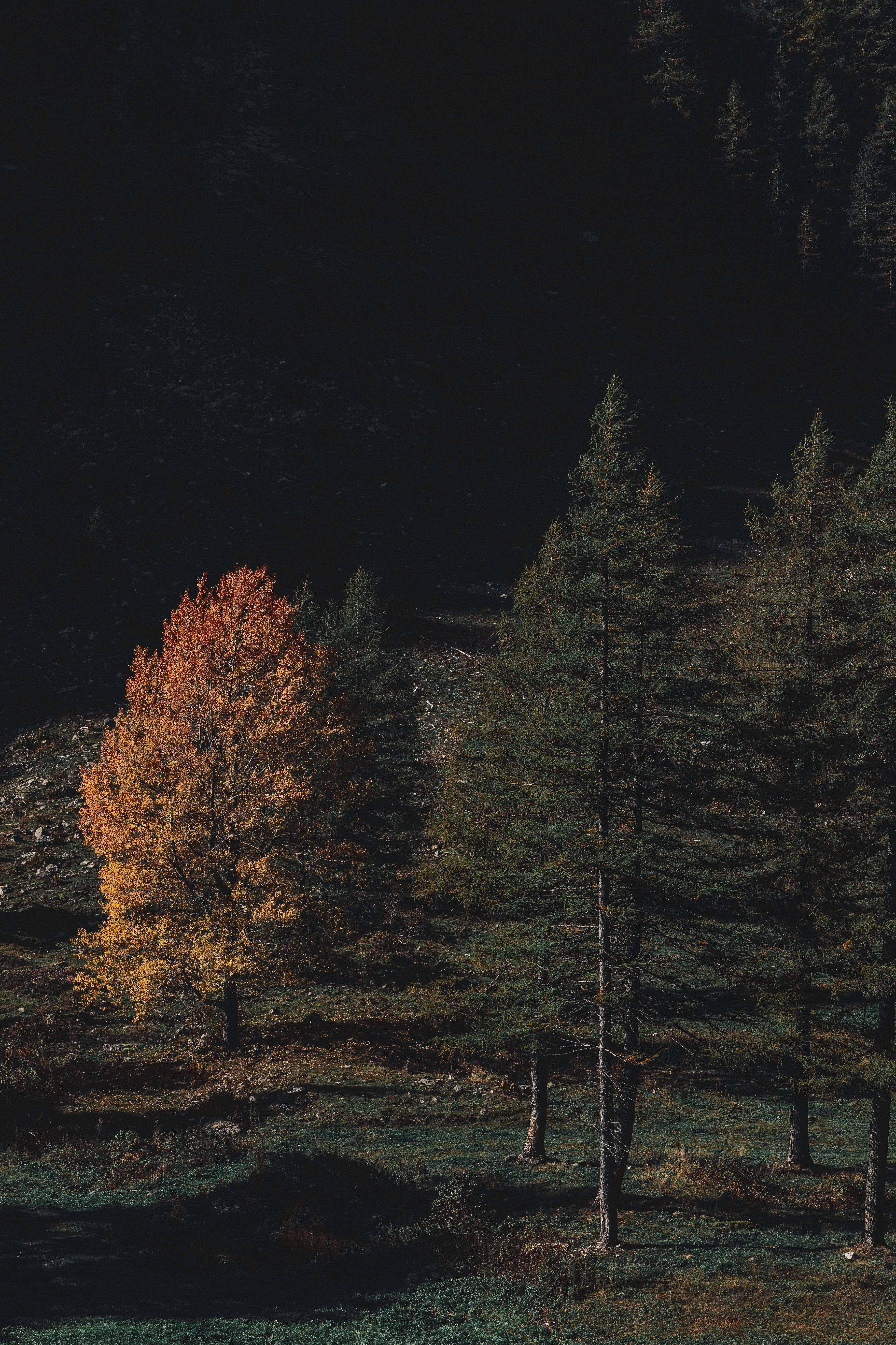 Brown and Green-leafed Forest during Night Time