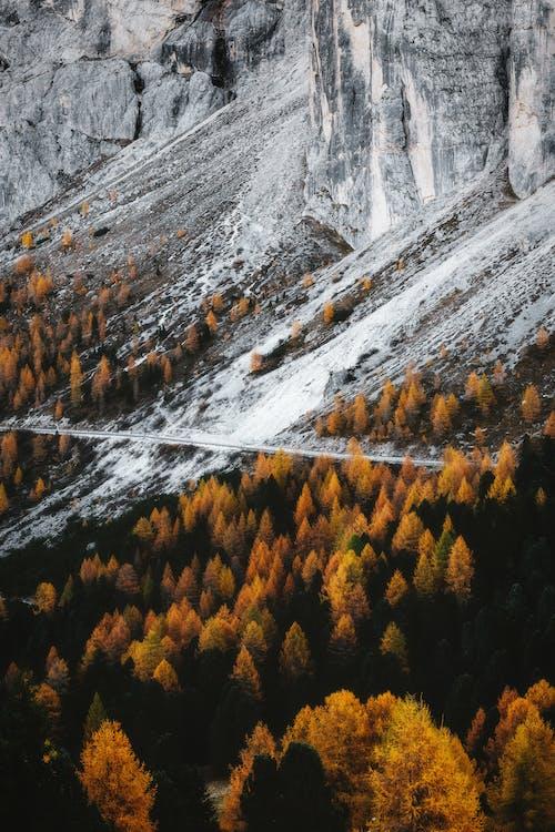 Bomen Dichtbij Berg