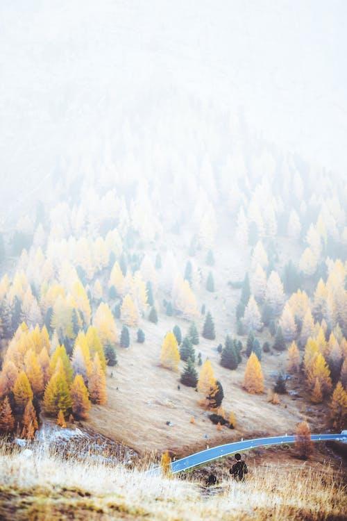 계절, 숲, 안개, 안개 낀의 무료 스톡 사진
