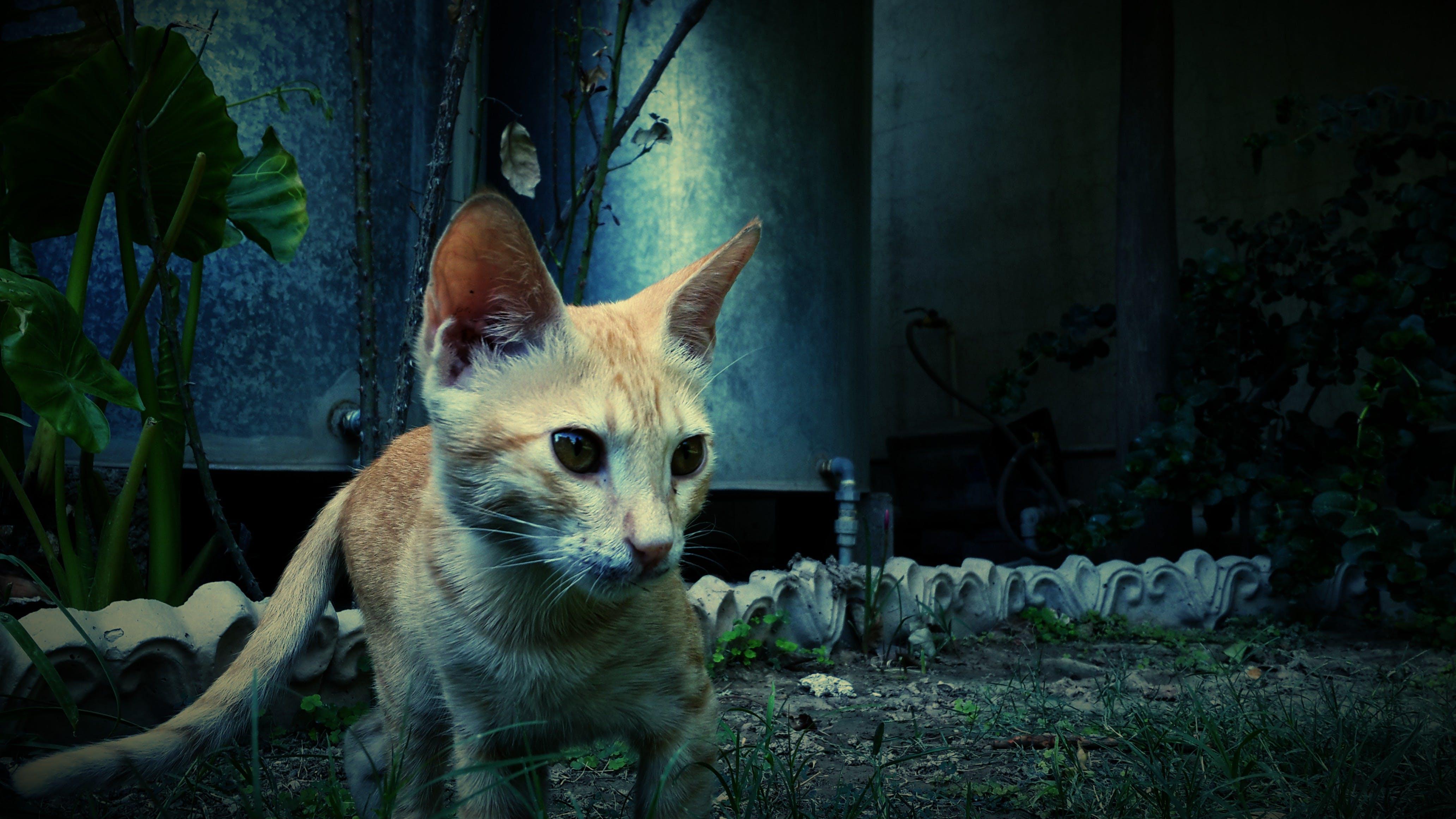Photography of Orange Cat Near Green Plant