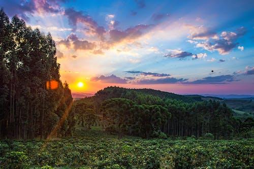オレンジ色の空, カラフル, コーヒー工場, ブラジルの無料の写真素材
