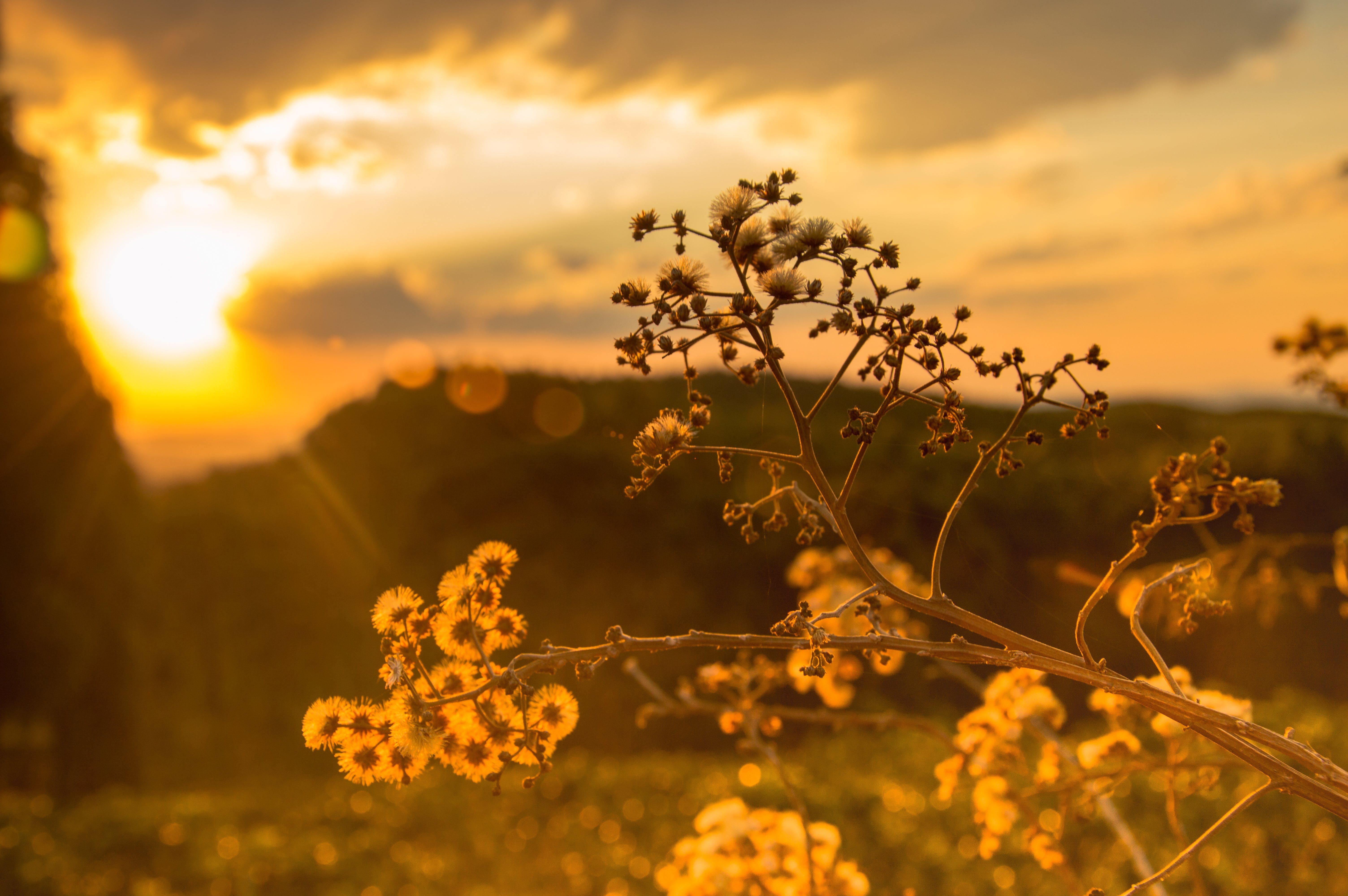 bländande ljus, blomma, blommor