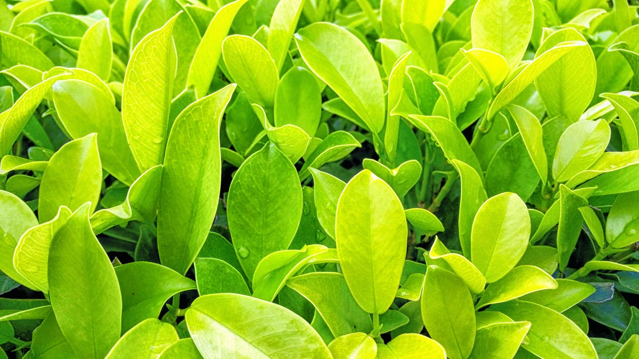 botanický, čerstvosť, detailný záber