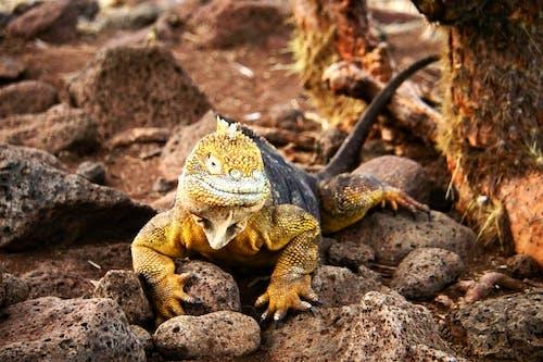 Kostenloses Stock Foto zu darwinian, ecuador, galapagos, galapagos inseln