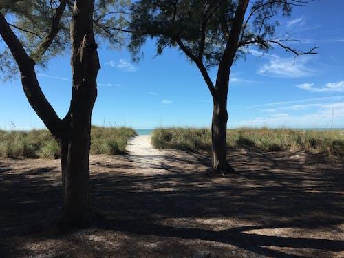 Free stock photo of beach, florida