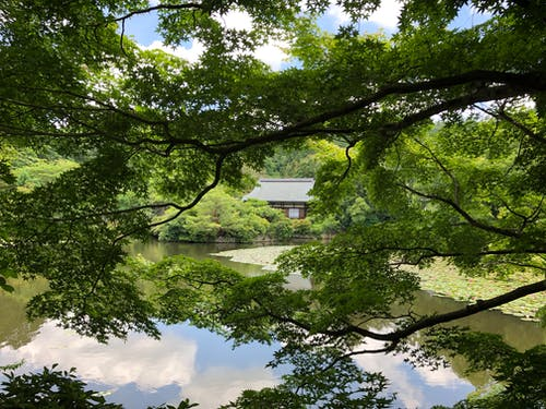 Free stock photo of japan, nature, temple