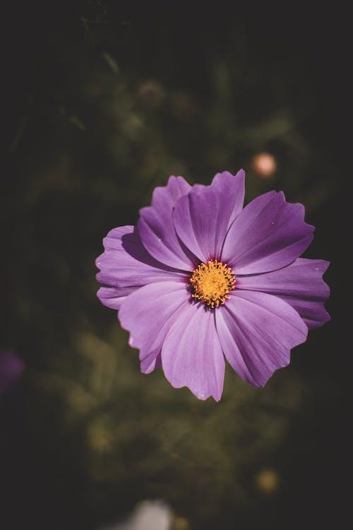 завод, квітка, макрофотографія