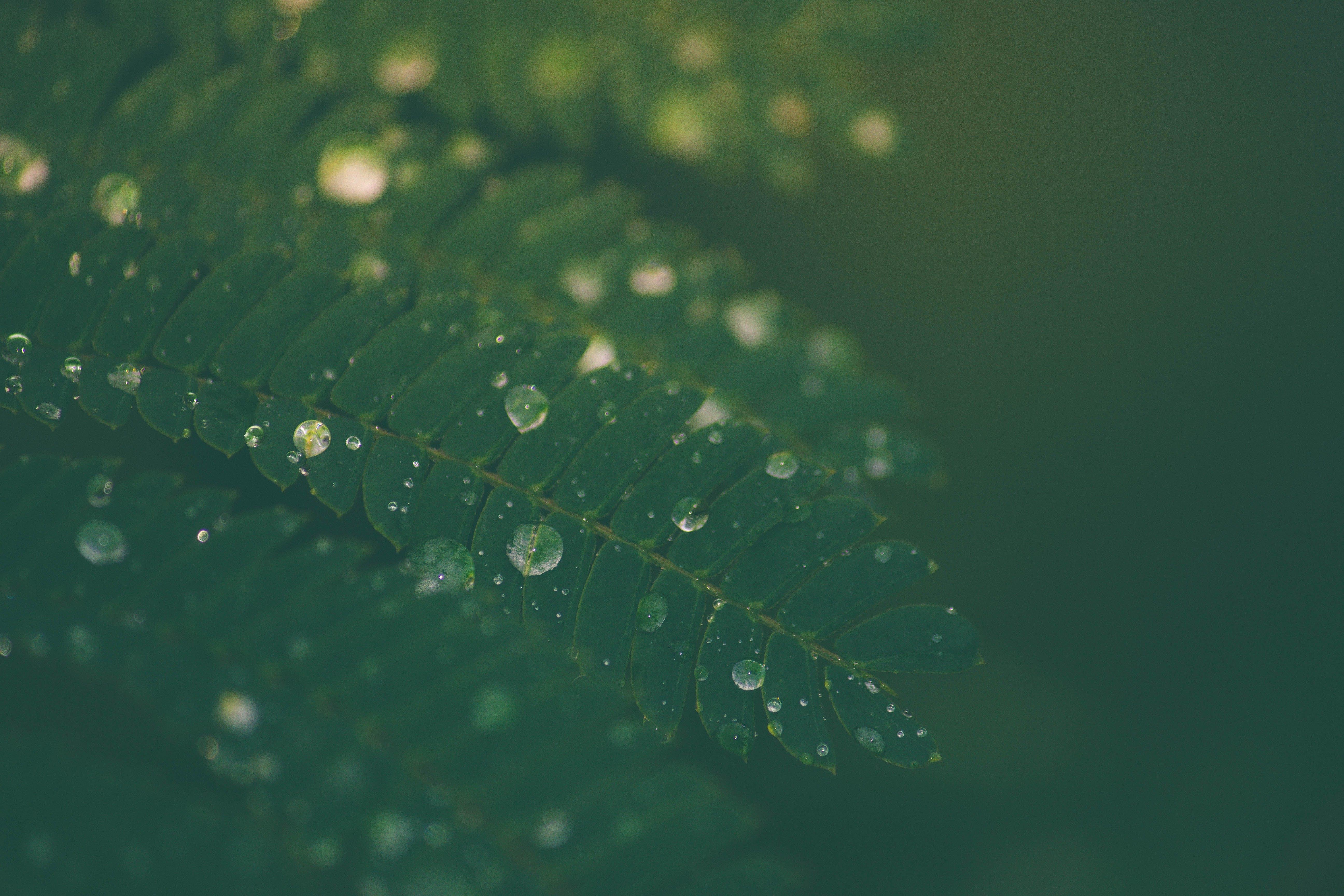 Δωρεάν στοκ φωτογραφιών με βροχή, κακόκεφος, μυστηριώδης, μυστικιστικός