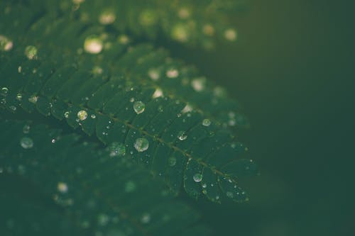 Immagine gratuita di foglia verde, lunatico, mistico, nebbia
