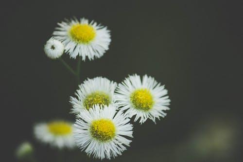 Immagine gratuita di fiori gialli, fiori primaverili