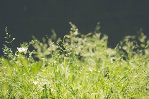 Immagine gratuita di erba, erba autunnale, erba verde, sfondo