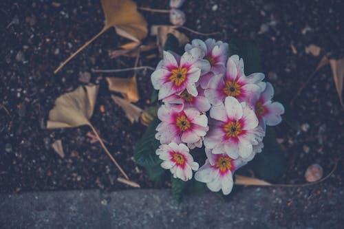 Ilmainen kuvapankkikuva tunnisteilla kaunis kukka