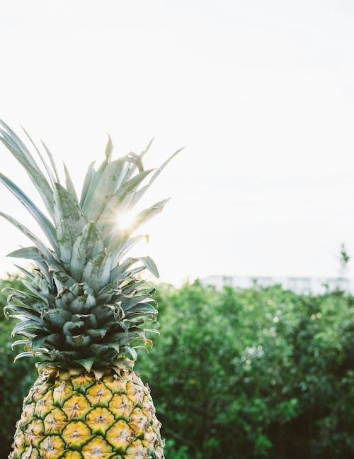 Pineapple Digital Wallpaper