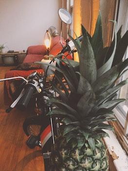 Free stock photo of plant, pineapple, window, loft