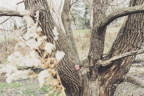 Imagine de stoc gratuită din anotimp, arbori, arid, buștean