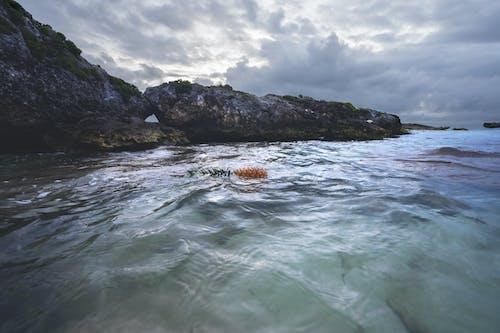 Photos gratuites de ananas, bord de mer, cailloux, côte