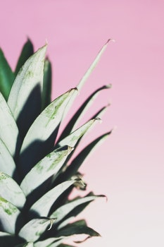 Free stock photo of food, abstract, pineapple, pink