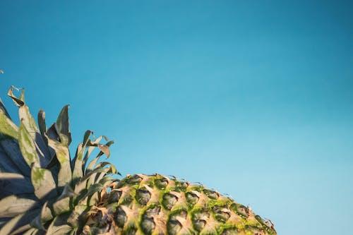 Gratis arkivbilde med ananas, blå, farger, nærbilde