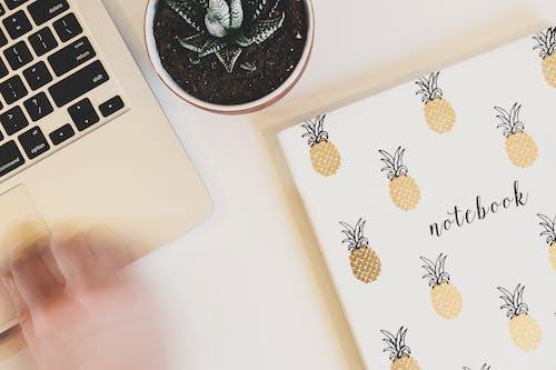 Безкоштовне стокове фото на тему «ананас, блокнот, домашня рослина, завод»