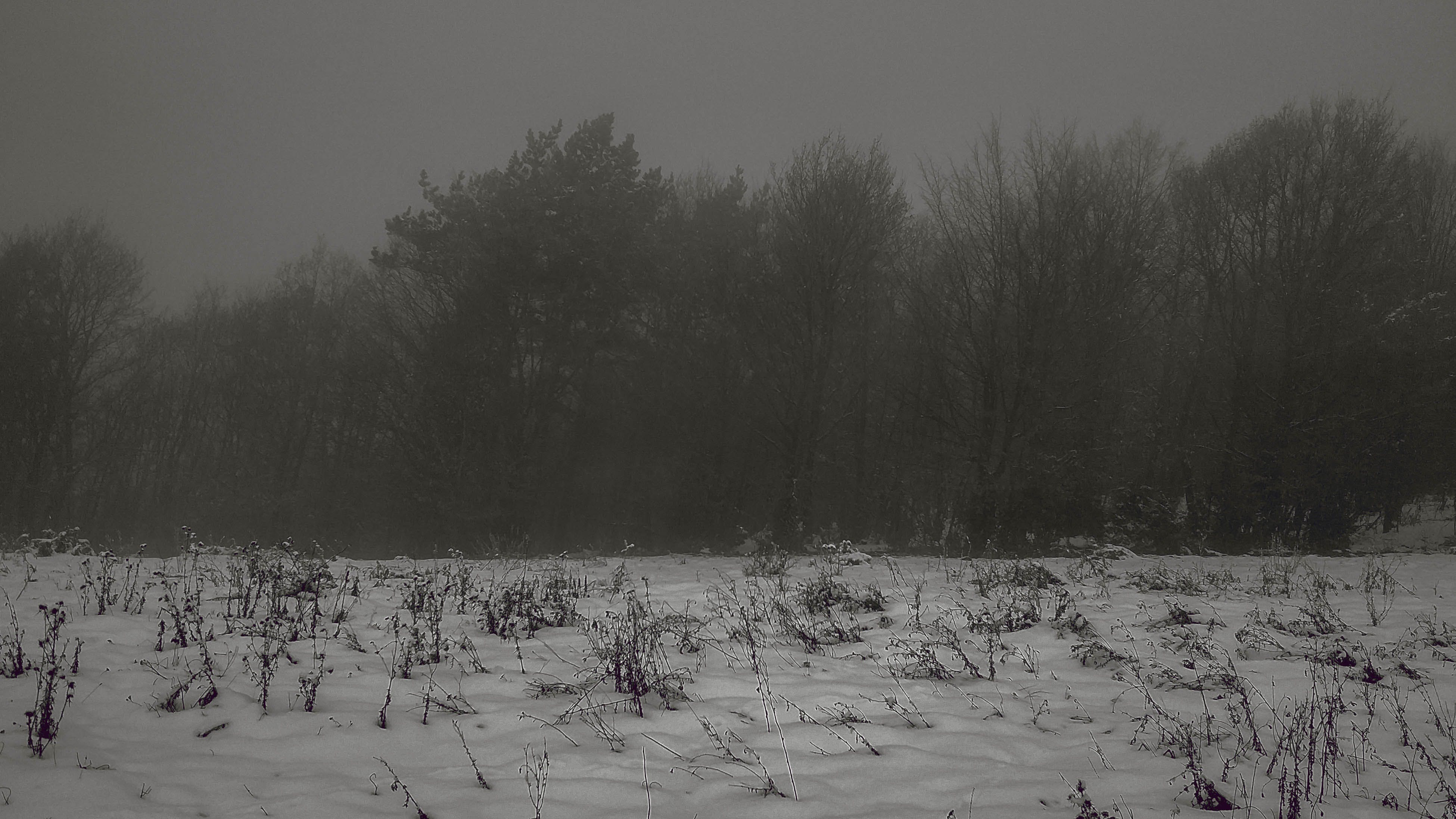 Free stock photo of field, fog, forest, snow
