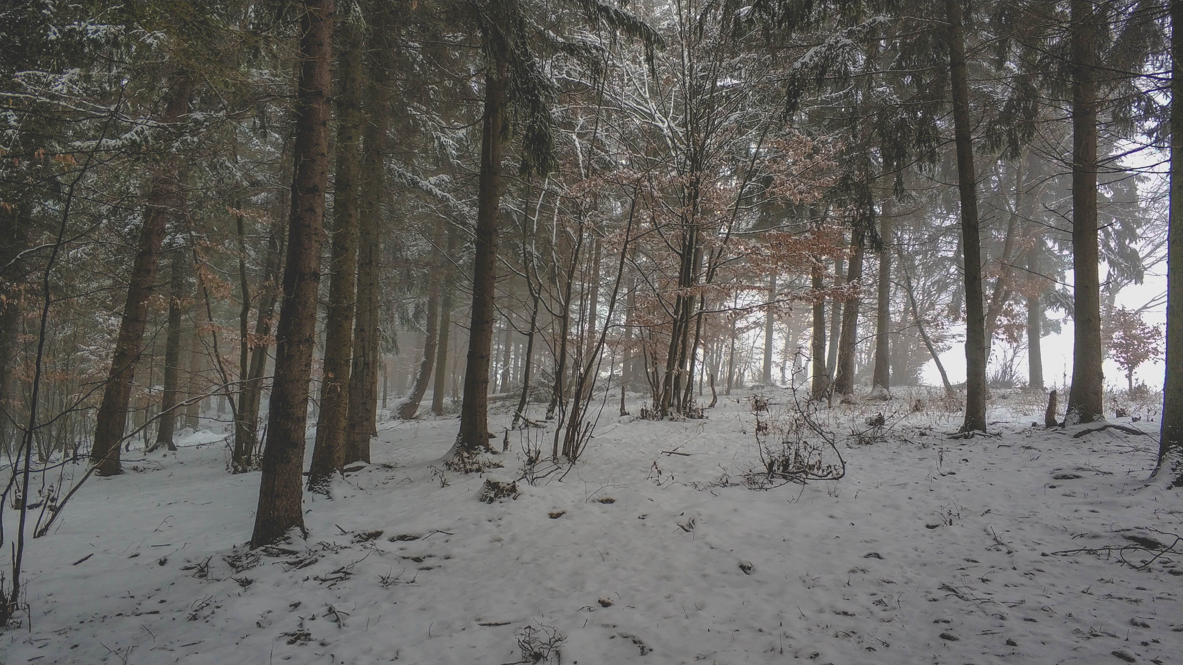 Free stock photo of fog, forest, silhouette, snow