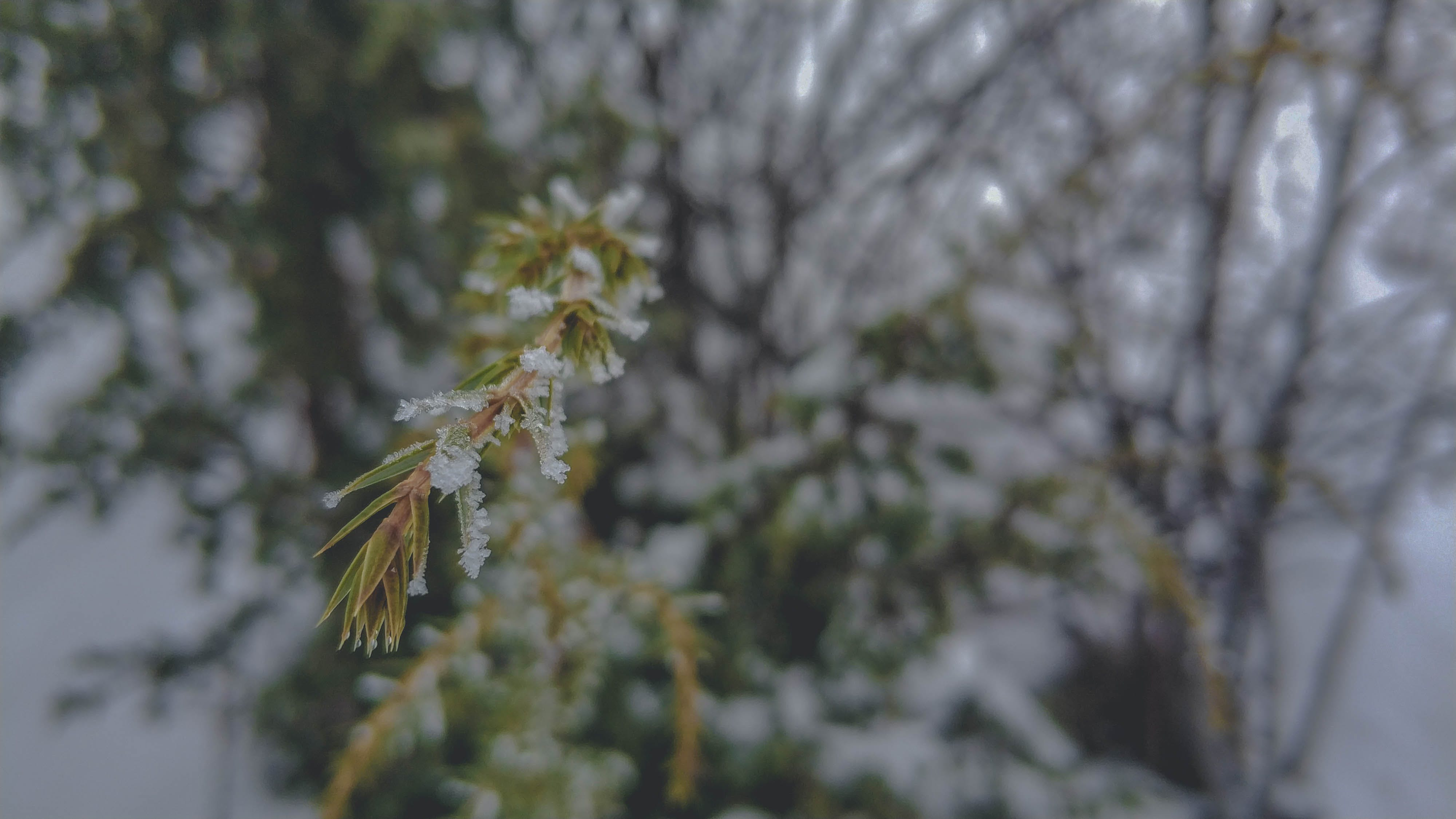 Free stock photo of blur, cold, focus, snow
