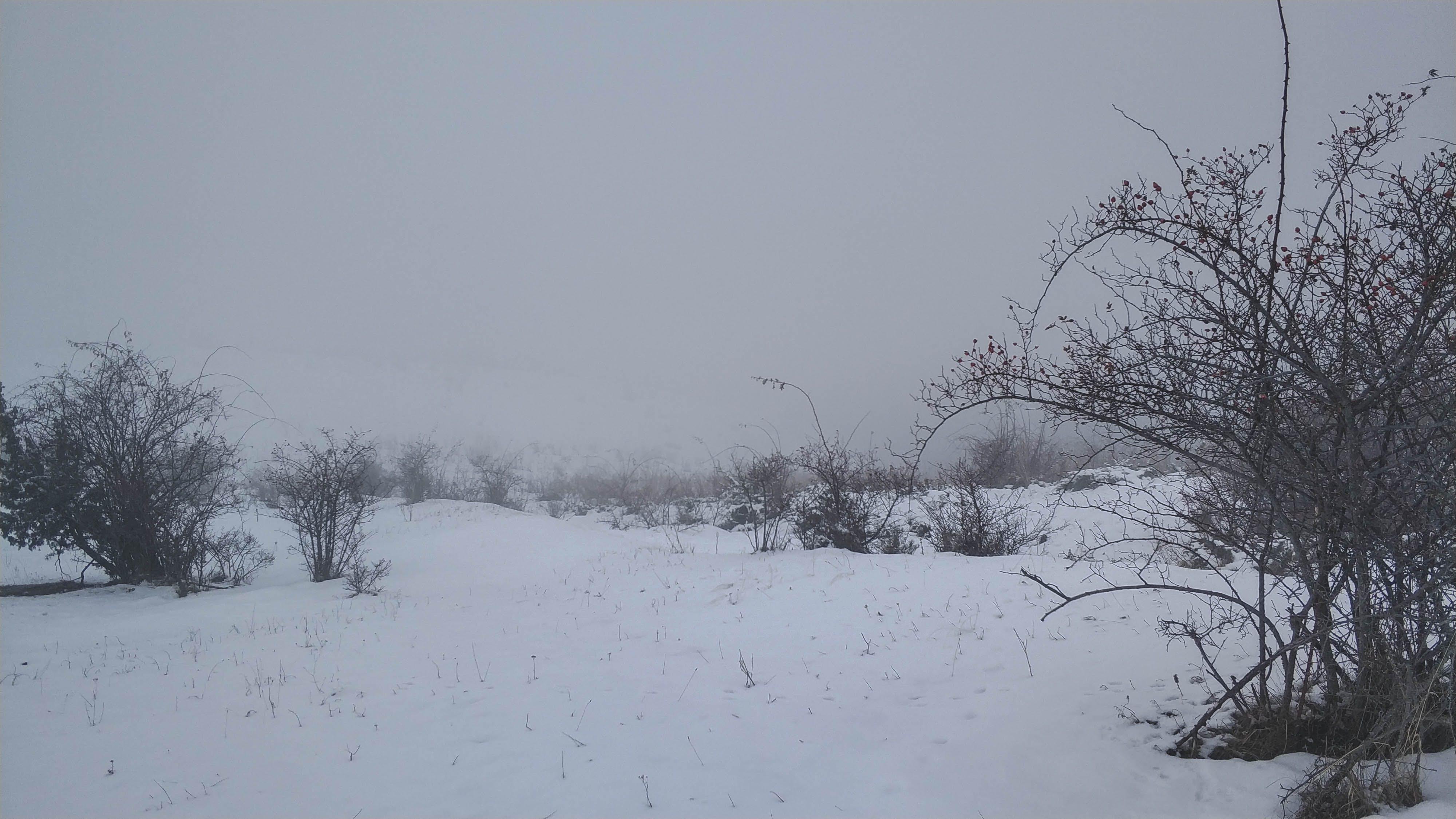 Free stock photo of fog, snow, vegetation, winter