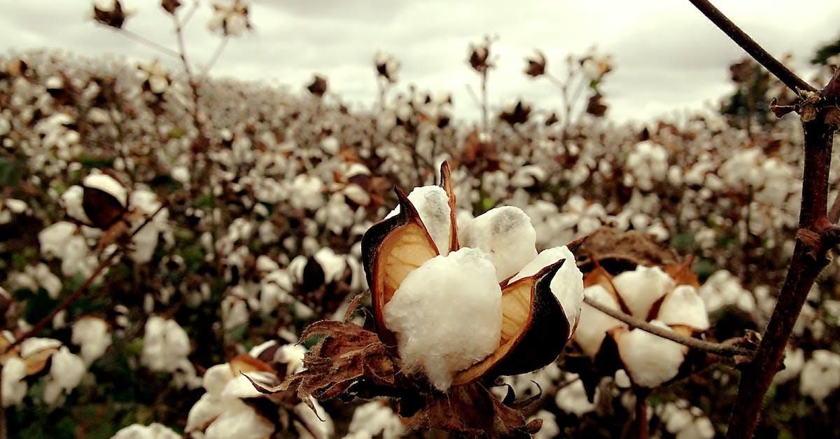 cotton culin plan ahead - HD1200×900