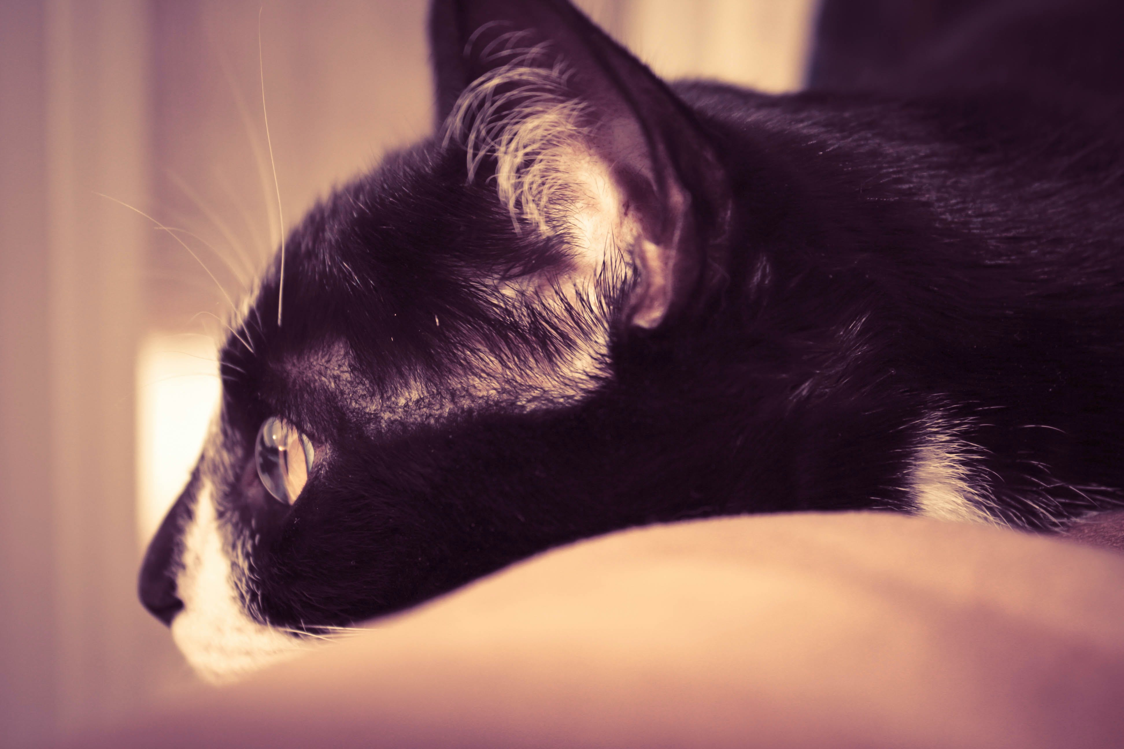 Free stock photo of cat, deep