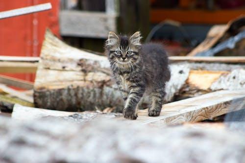 Základová fotografie zdarma na téma farma, kočka
